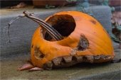 Time to recycle your old Jack O'Lantern