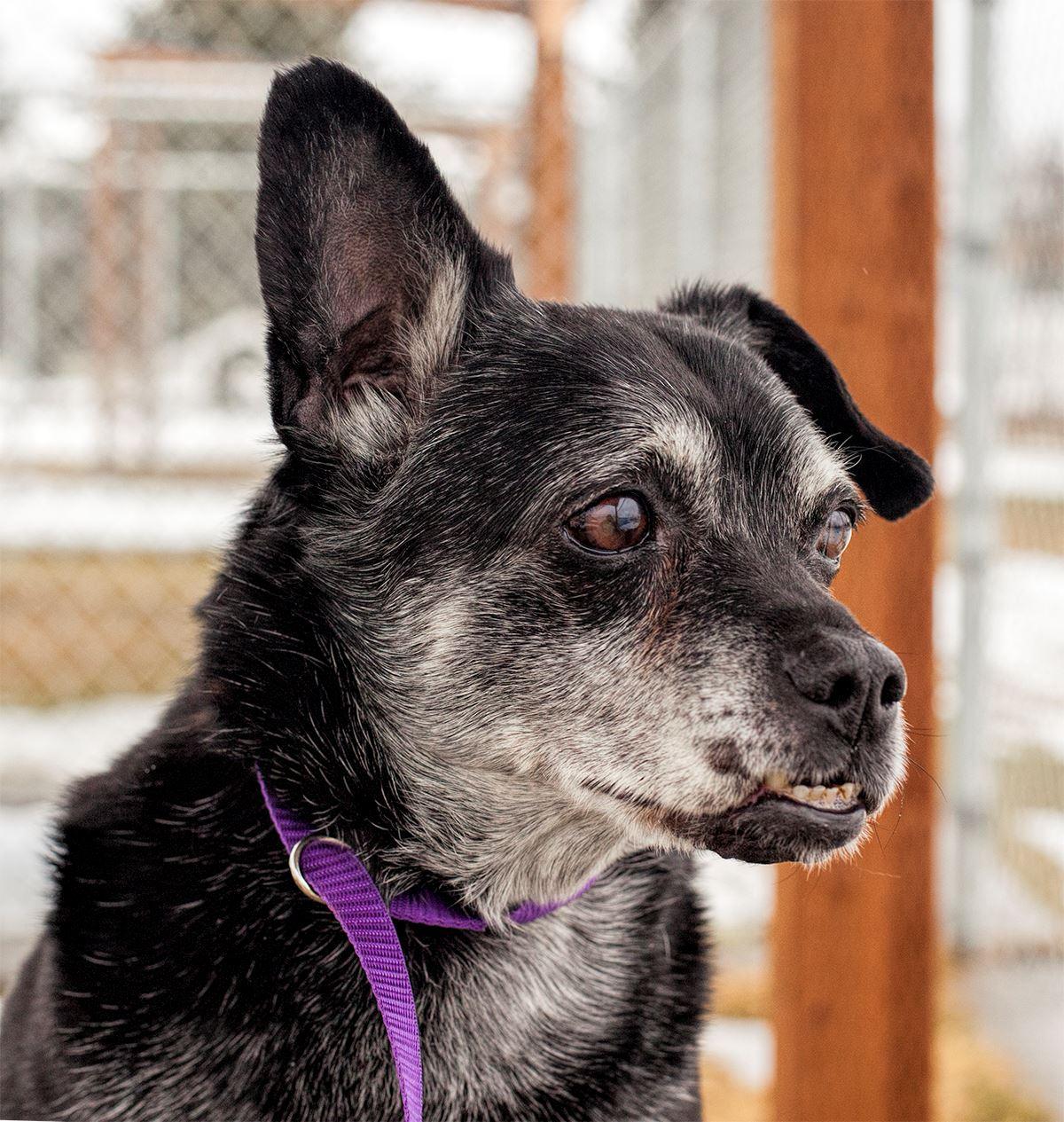 SCRAPS - Regional Animal Protection | Spokane County, WA