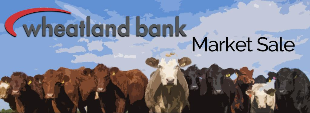 Market Stock Banner with Cows