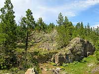 Image of a steep hill with rocks and trees.